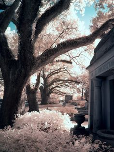 Infrared Magnolia Cemetery Alabama | by Mary Homick