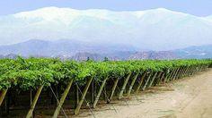 Mendoza, Martin Luther King, Patagonia, Vineyard, Koh Tao, World, Day, Outdoor, Popular