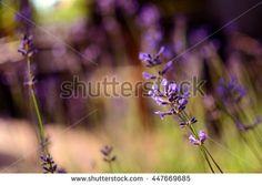 Outdoor Health Stock Photography   Shutterstock