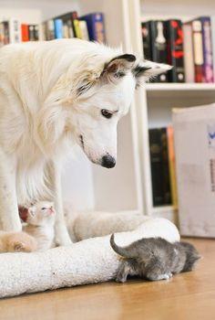 Rodzinka! // Ubierz zwierzaki na http://www.ubieranki.eu/