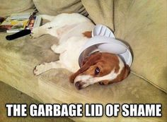 No dog shaming sign needed...the garbage can lid stuck on his head and look on his face is enough. :)