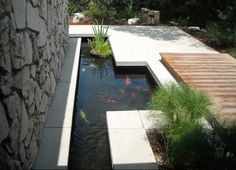 Interaction of concrete slab and koi pond.