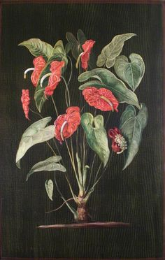 A Colombian Aroid by Marianne North