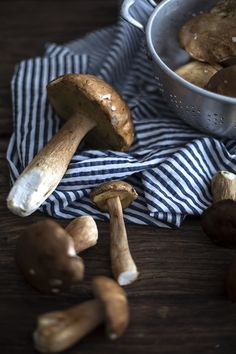 Mushrooms by nilayeren - Nilay Eren