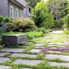 The groundhog may say we have 6 more weeks of winter, but we know spring is right around the corner. (Photo by @robert.wallace.johnson)  #landscapearchitecture #longisland #garden #mazus #springiscoming