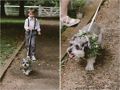 Ring bearer and wedding dog