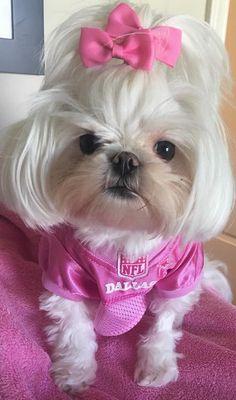 She is so cute Productos especializados para el bichon maltes. #bichonmaltes #maltese #puppy #dog