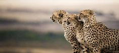 Daily Dozen for Sept. 15, 2016 — Photos -- National Geographic Your Shot