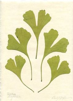 gingko japanese pattern - Google Search