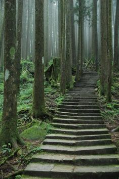 forest steps. beautiful!! I would love to take a walk here!