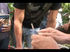 ELABORACION DEL APICHI un Fertilizante Orgánico - YouTube