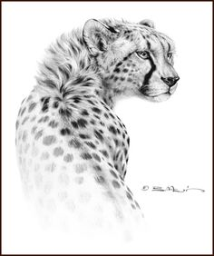 ANIMAL ART (Traditional Oil) by Bill Melvin, via Behance