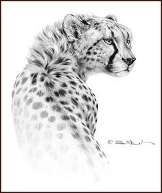 ANIMAL ART (Traditional Oil) by Bill Melvin, via Behance
