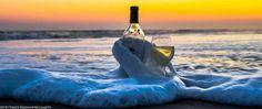 Gourmet Au Bay -Wine Tasting in Bodega Bay