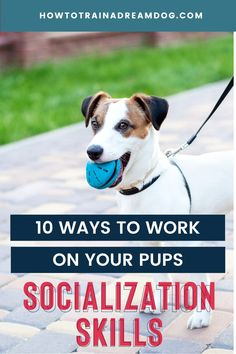 Socialization is not just about letting your pup play with other pups, although that is a great start! Here are 10 ways to work on your pups socialization skills. Puppy Obedience Training, Puppy Training Tips, Training Your Dog, Parkour, New People, Puppy Socialization, Reactive Dog, Cute Dog Photos, Best Puppies