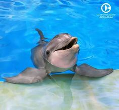 Winter the dolphin's story of survival has inspired millions of people. She has become an ambassador for rescue & rehab work at Clearwater Marine Aquarium. Dolphin Reef, Dolphin Tale, Bottlenose Dolphin, Dolphin Images, Dolphin Photos, The Ocean, Orcas, Water Animals, Animals And Pets