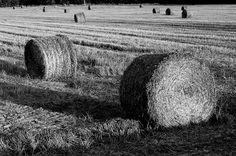 Hay bales, Tuscany, Italy.