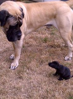 He's afraid he's going to smush him.