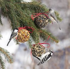 (link includes info on bird seed blends & mixes)