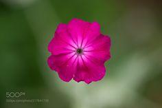 Drifting Flower -