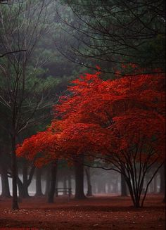 .I am in love with this photo! Colors are gorgeous...I want to jump into this photo and solve the mysteries in it's beauty.