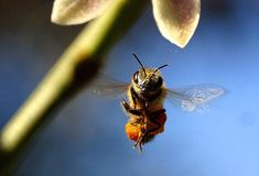 A new study finds that bees can have positive feelings.