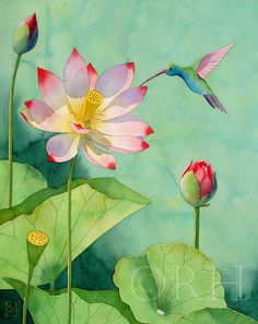 8x10 Watercolor Print LOTUS AND HUMMINBIRD by rwhooper on Etsy
