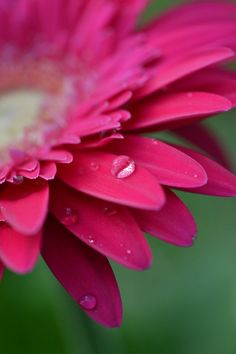 Macro flower photography ideas: create fake dew drops to act as miniature lense