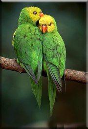 Birds < Revenir à l'index < Back to Index Parrot, Birds, Animals, Photography, Parrot Bird, Animales, Animaux, Bird, Animal