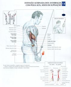 Great triceps make your whole arm look bigger Killer Arm Workouts, Gym Workouts, Spin Bike Workouts, Chest Workouts, Weight Lifting Motivation, Cycling Motivation, Bodybuilding, Workout Posters, Muscle Anatomy