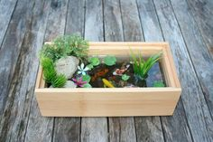 21 fascinating low budget diy mini ponds in a pot mini for Miniteich mit fischen