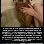 The heartwarming story of Bran the dog's life. (I thought you would like this story. And SIDE NOTE: Well of course he is a good boy, he IS a Golden Retriever, the most loving, most giving, & selfless breed ever!! 2nd SIDE NOTE:  RIP Lexy, you were the best good girl to tolerate the cats! ❤️️™)
