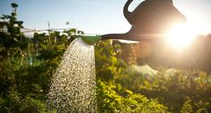 This gardening habit is extremely good for your health  - countryliving.co.uk