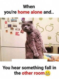 Get Positive Energy for your Life with Awesome Super Funny Animals Memes Pictures with images Looking for the best funny Pictures & images Funny Animal Jokes, Funny Cat Memes, Animal Memes, Funny Cats, Funny Animals, Hilarious, Funny Laugh, Fun Funny, Funny Animal Pictures