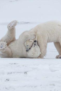Animals And Pets, Baby Animals, Cute Animals, The Bear Family, We Bear, Bear Photos, Mundo Animal, Fauna, Animals Beautiful
