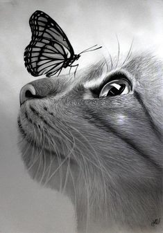 Original Animal Drawing by Olinda Camelo Realistic Animal Drawings, Pencil Drawings Of Animals, Animal Sketches, Drawing Animals, Art Drawings Sketches Simple, Cool Drawings, Drawing Ideas, Art Du Croquis, Butterfly Drawing