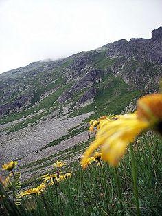 Yellow Flower, Grey Mountain by TheMoonAndSun.deviantart.com