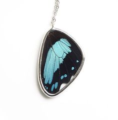 Papilio Bromius Butterfly Wing Necklace. Real Butterfly Wing