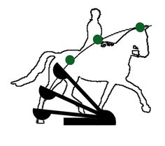 This page gives you a closer look at how the horse's head and neck influence the horse's balance. Horse Anatomy, Dressage Horses, Horse Training, Head And Neck, Horse Love, Thesis, Exercises, Super Cute, Passion