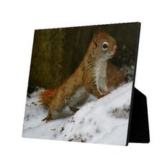 Red Squirrel At The Birdfeeder Custom Display Plaque by KJacksonPhotography