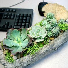 Succulent Enchantment Garden- Freytag's Florist