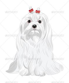Vector Serious white Dog Maltese Breed Sitting  #GraphicRiver         Color sketch white serious dog Maltese breed with red bows sitting.  Fully editable, vector objects are grouped on separate layers. EPS 8 plus high-quality Jpeg. No gradients, no transparency, no blends, no meshes.                 Created: 12January13 GraphicsFilesIncluded: JPGImage #VectorEPS Layered: Yes MinimumAdobeCSVersion: CS Tags: Bichon #animal #bangs #beautiful #bow #breed #charming #cute #dog #elegant…