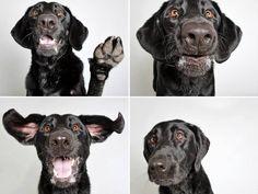 Paw Up--Photo Booth doggies :-)