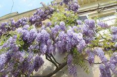 10 Φυτά που δεν πρέπει να βάλεις ποτέ στον κήπο σου!