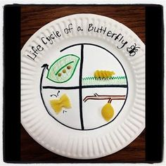 Butterfly life cycle using pasta and paper plates