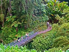 Trail to Akaka Falls, Hamakua Coast, Big Island of Hawaiʻi