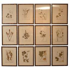 set of twelve pressed botanicals