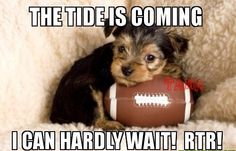 Yorkshire Terrier Puppy with Football - Unnecessary Cuteness! Best Dog Breeds, Best Dogs, Puppy Breeds, Yorky, Yorkshire Terrier Puppies, Mans Best Friend, Small Dogs, Friends, Super Bowl