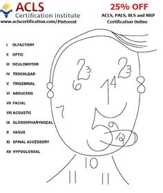 This is a great mnemonic to learn Cranial nerves