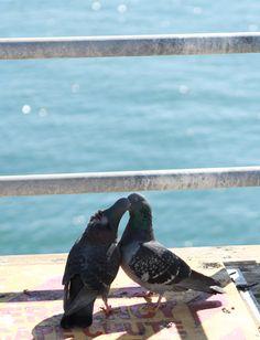 pigeons on pier Style Scrapbook, Park Photography, All Birds, Far Away, Girly Stuff, Santa Monica, Pigeon, Kissing, Back Home